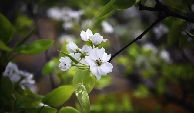 姑苏不只有园林古镇还有繁花似海,苏州全年赏花旅行攻略
